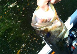 (魚画像5)