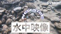 【公式】SVSB Jr. 水中映像