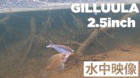 【公式】GILLUULA 2.5inch 水中映像
